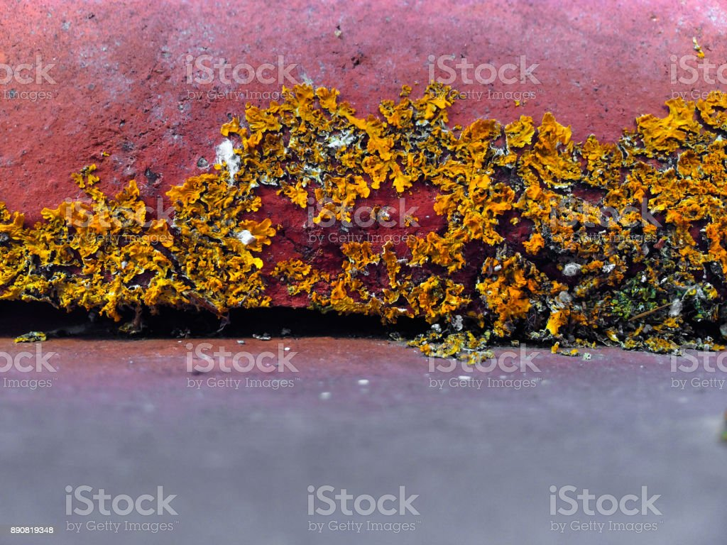 Lichens on a roof tile stock photo