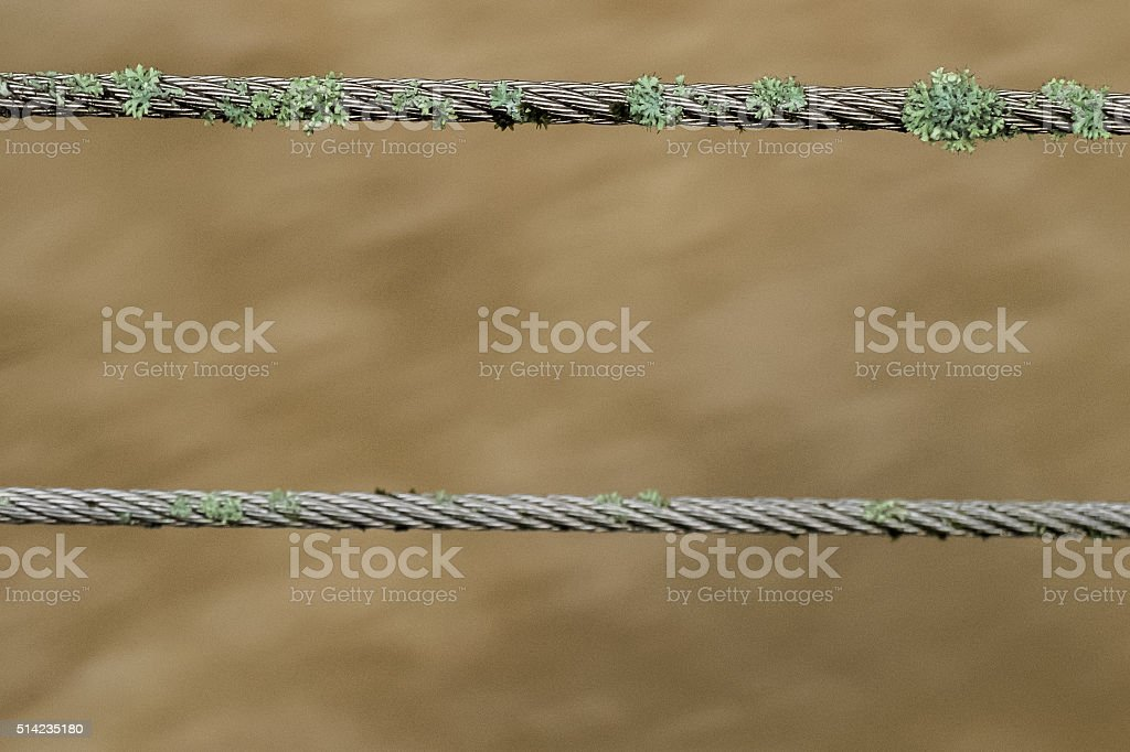 Lichens on a steel cable stock photo