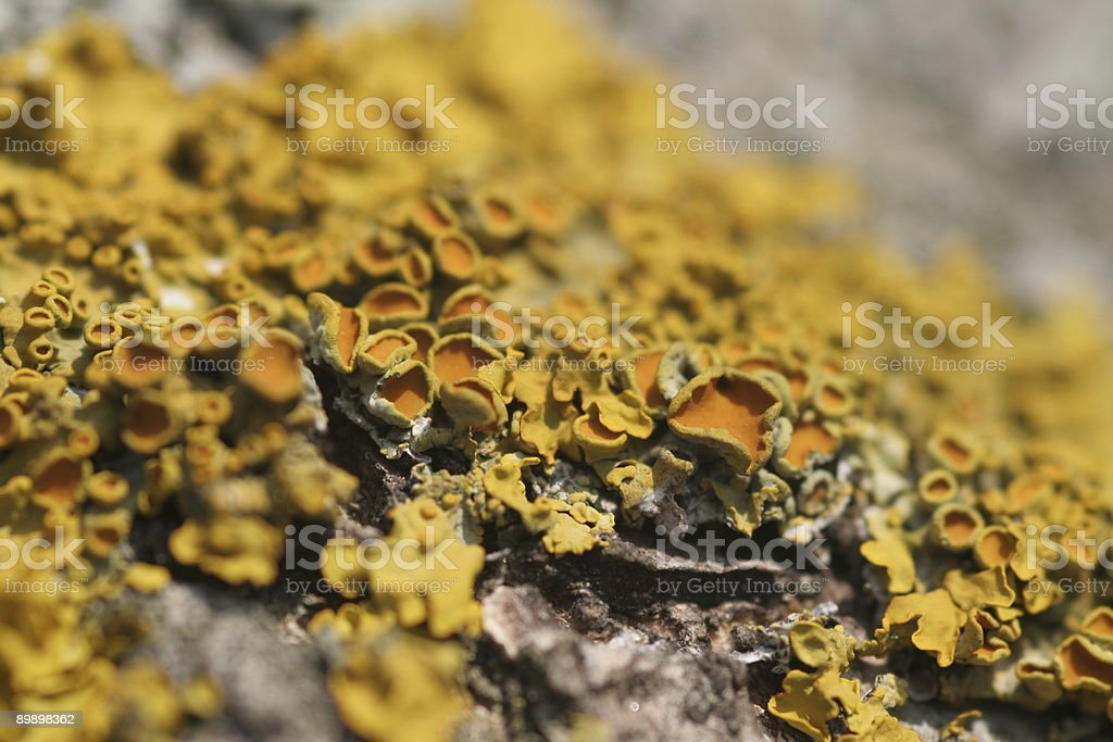 Lichens-2 royalty-free stock photo