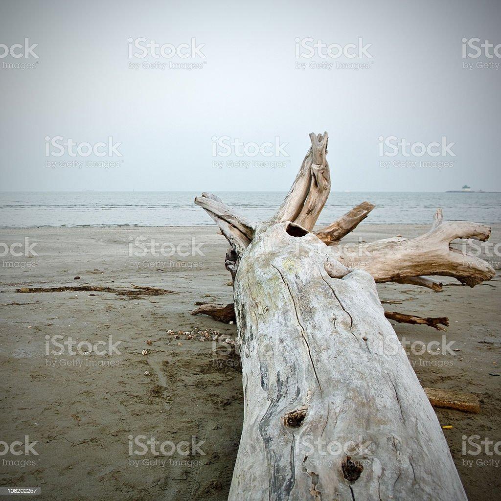 Lido Driftwood stock photo
