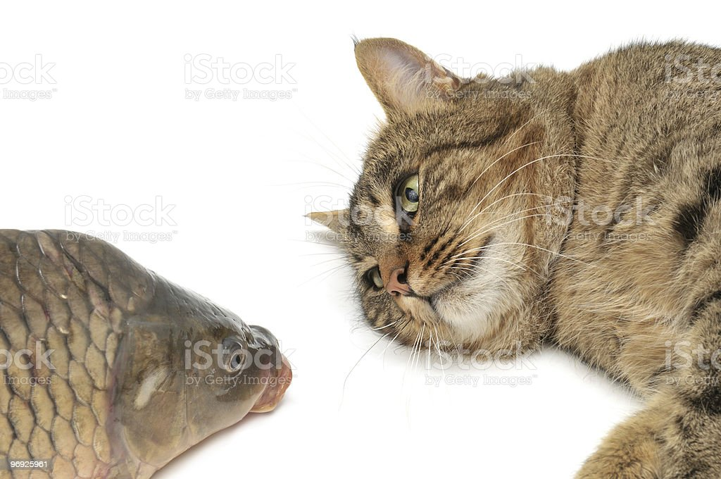 Lie cat royalty-free stock photo