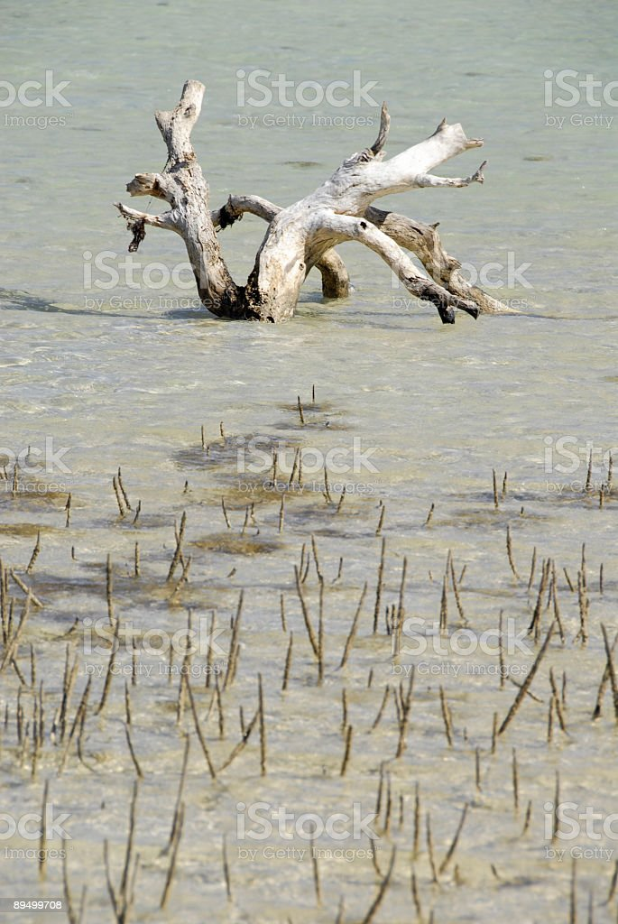 Life and death in nature royalty-free stock photo