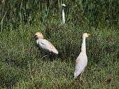 Birds and life at saintes maries de la mer