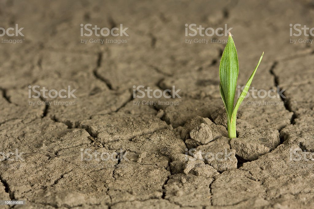 Life beginning on wasteland stock photo
