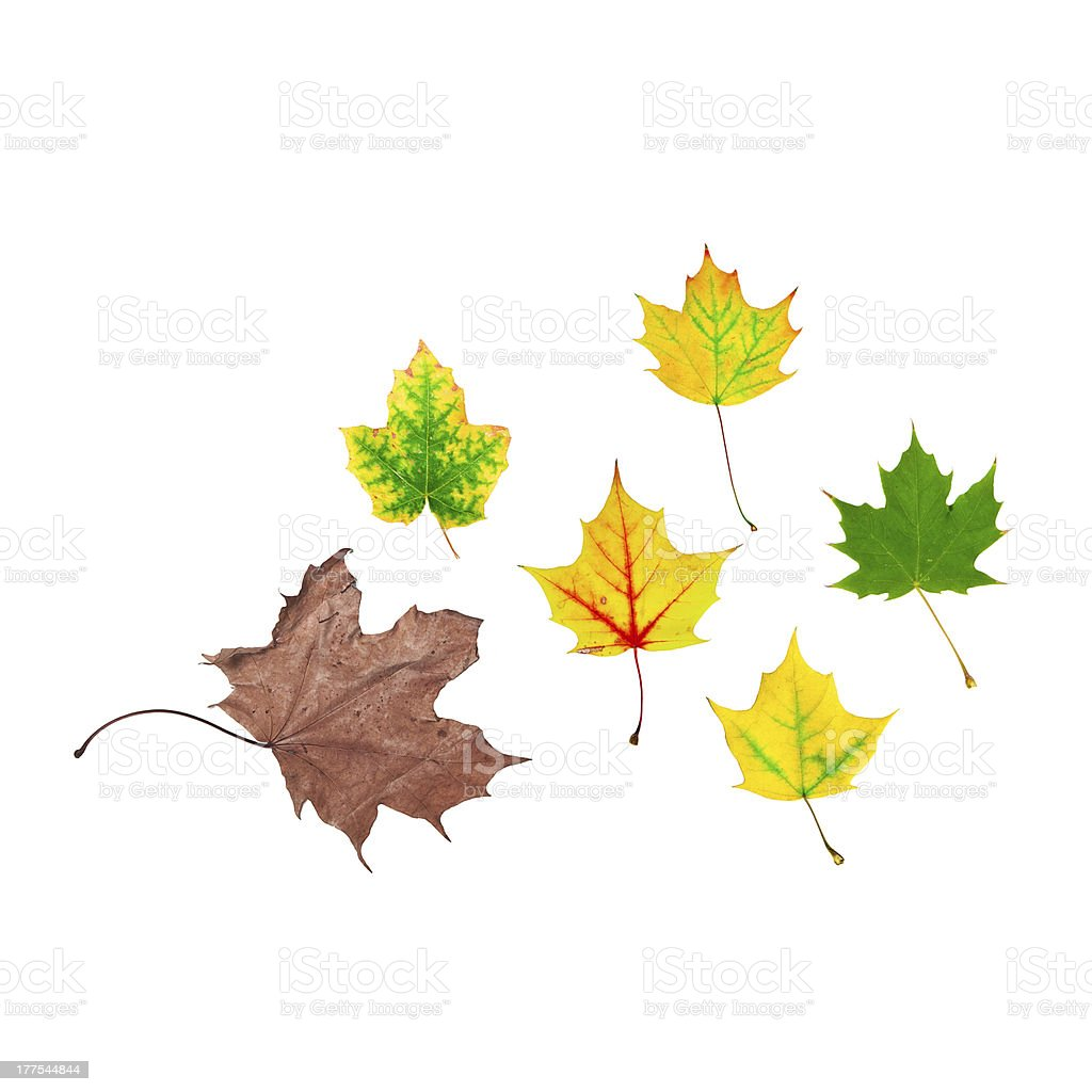 life cycle of leaf stock photo