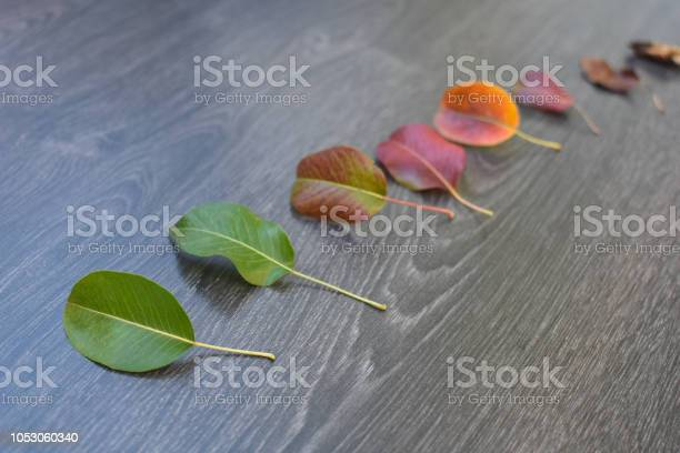 Life cycle of leaves on the wooden background picture id1053060340?b=1&k=6&m=1053060340&s=612x612&h=jfd9pxffmxivae0btkp 5og9nec0rjhg4qfawaspvns=