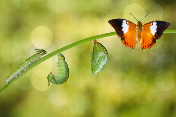 Life cycle of tawny rajah butterfly picture id538988612?b=1&k=6&m=538988612&s=612x612&w=0&h=nraqew1tohebrhfymx8lvolv jt9ixk4p 3kkbjxjwm=