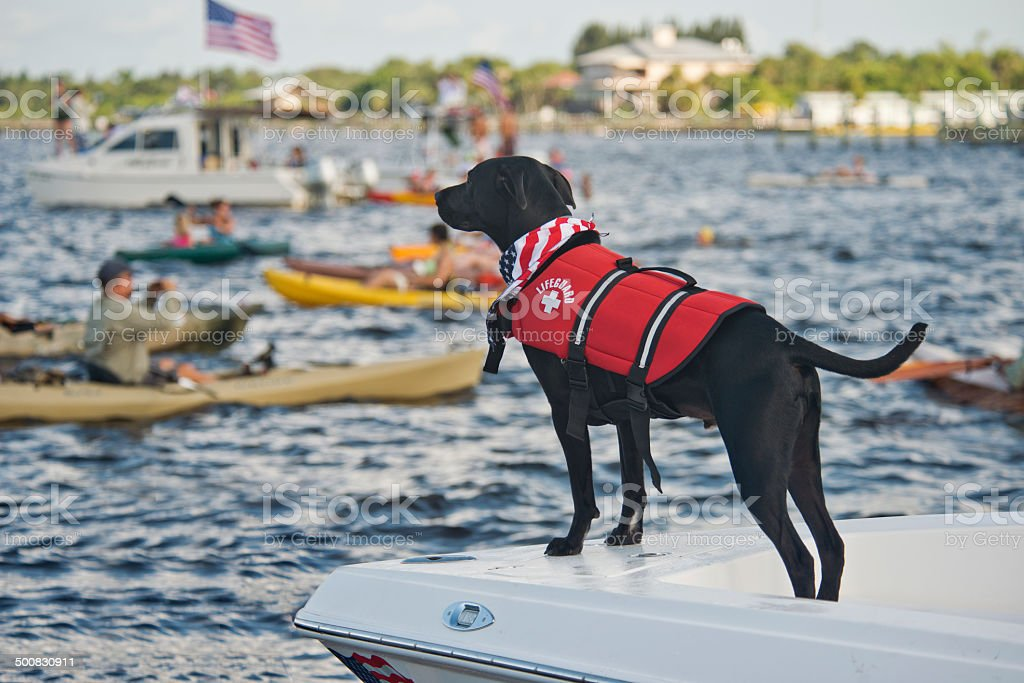 Life Guard Dog during Freedom Swim 4th of July stock photo