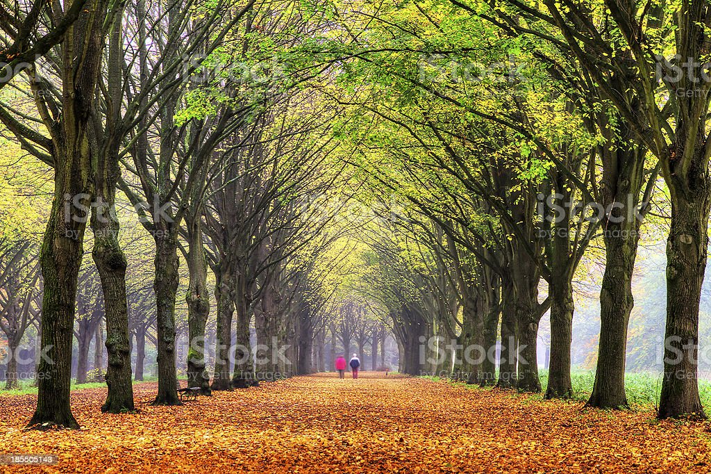 Life in autumn stock photo