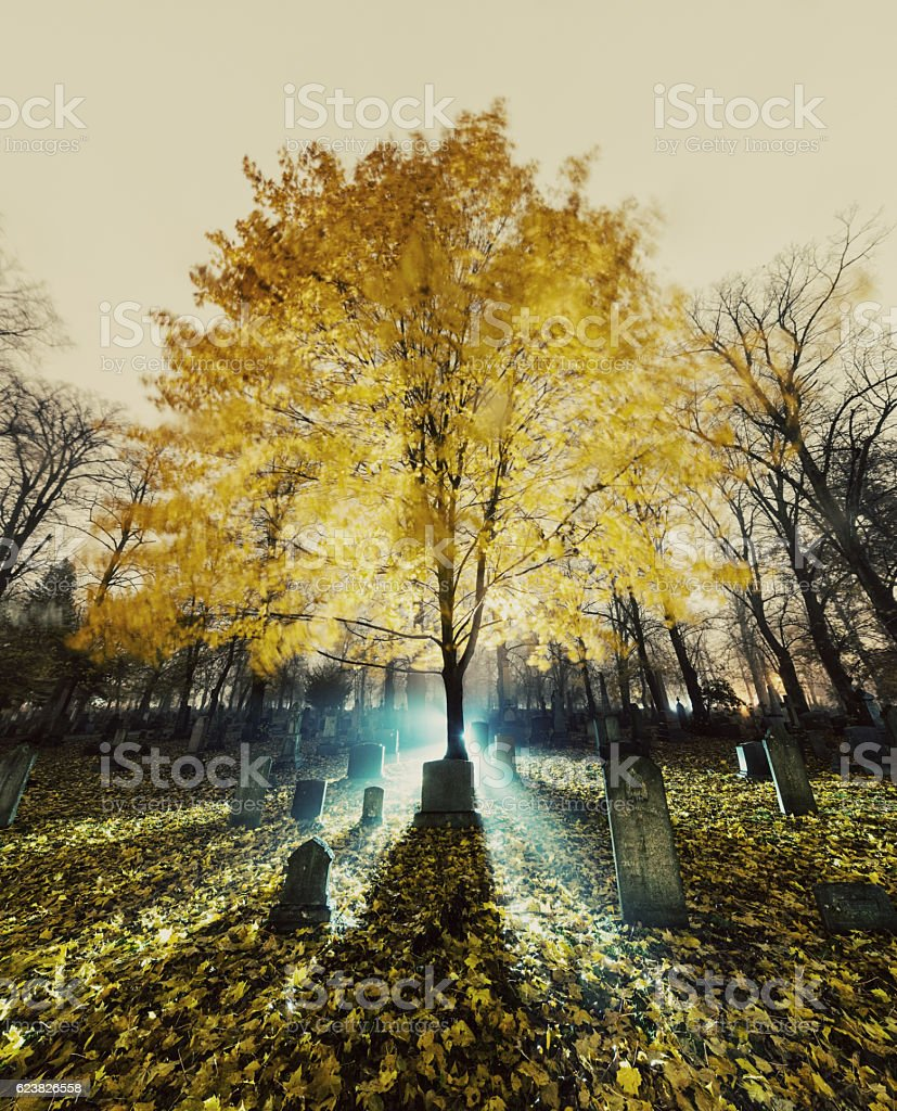 Life in Death stock photo