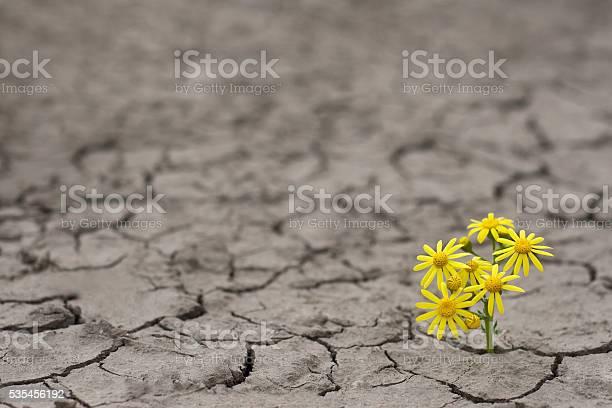 Life in extreme conditions picture id535456192?b=1&k=6&m=535456192&s=612x612&h= hvqyop0n7bw5znugoyf7fibawb cobqi xbumkgsga=