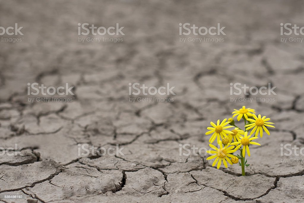 Life in extreme conditions stock photo