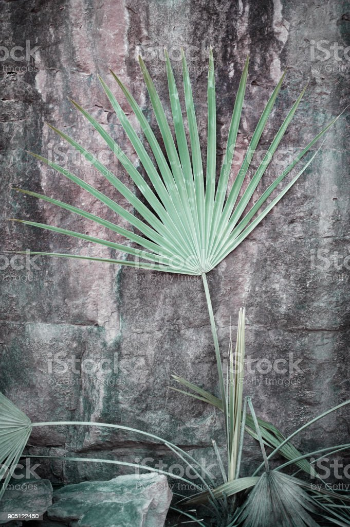 Life In Harsh Conditions stock photo