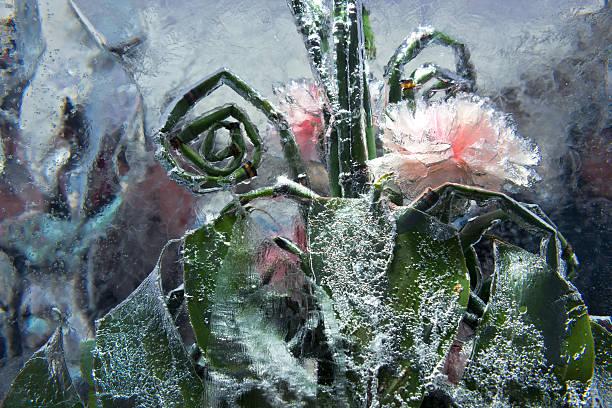 Leben in Eis – Foto