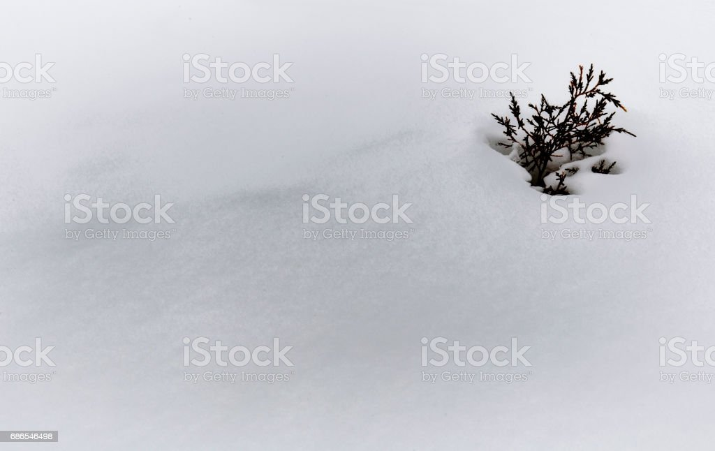 leven in sneeuw royalty free stockfoto