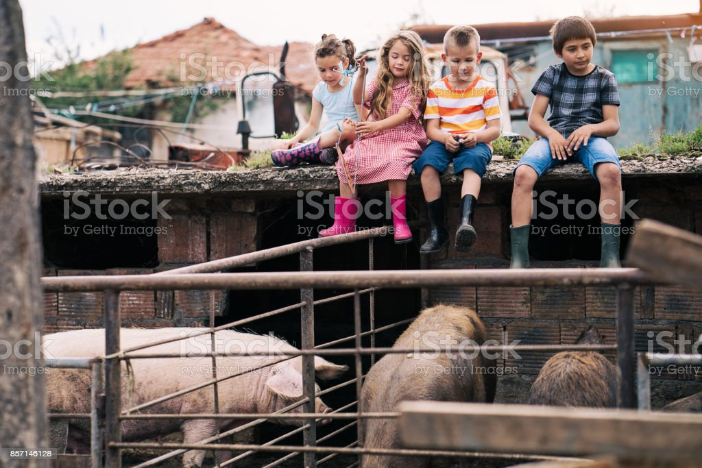Life in the animal farm stock photo