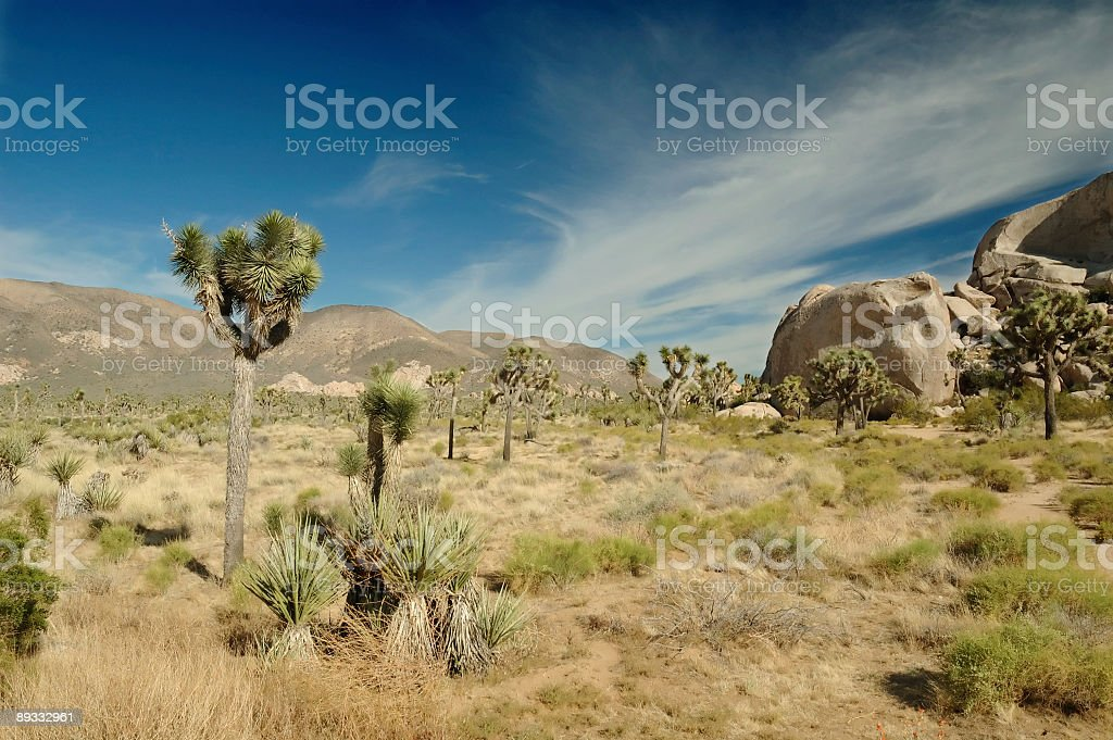 Life in the desert royalty-free stock photo