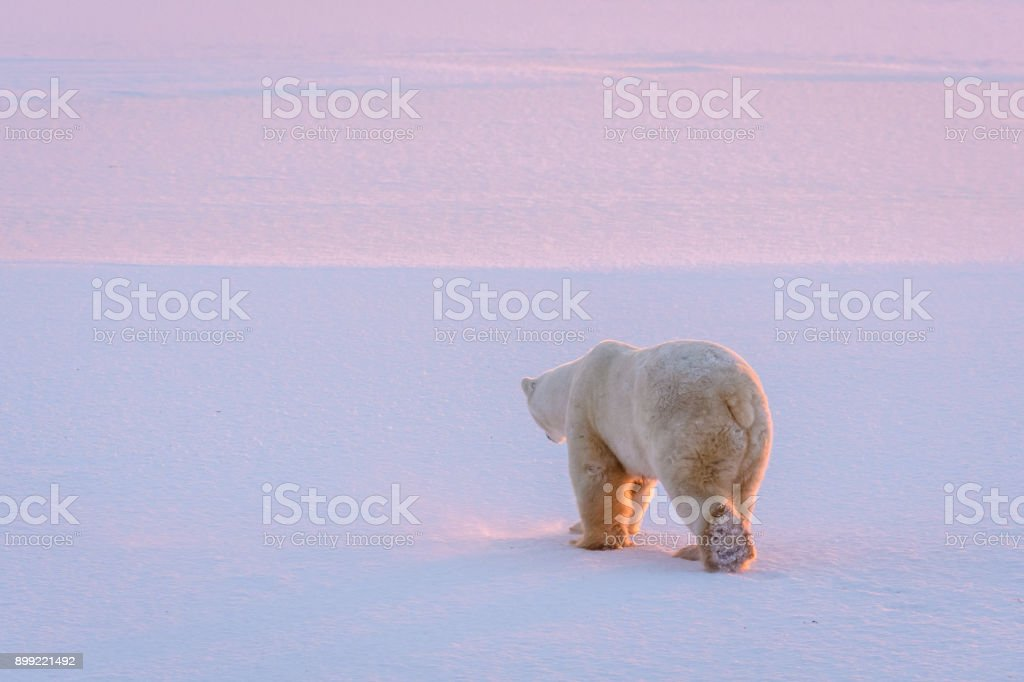 Life in the frigid north stock photo