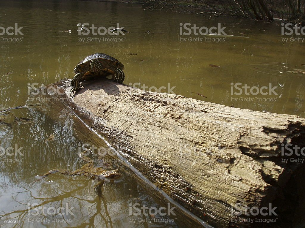 life in the pond royalty-free stock photo