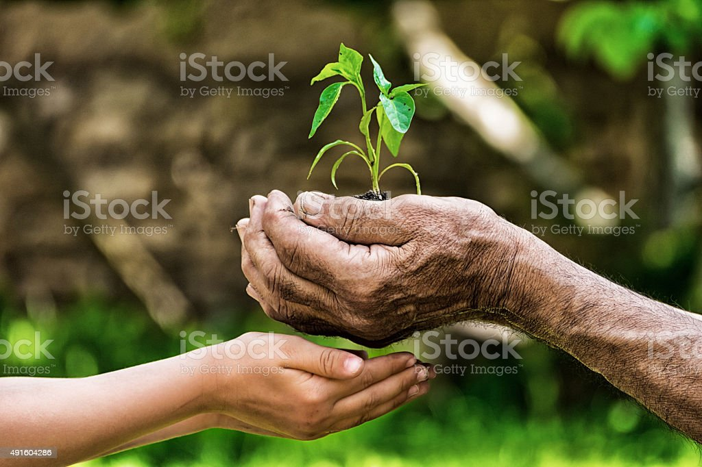 life in your hands - garden stock photo