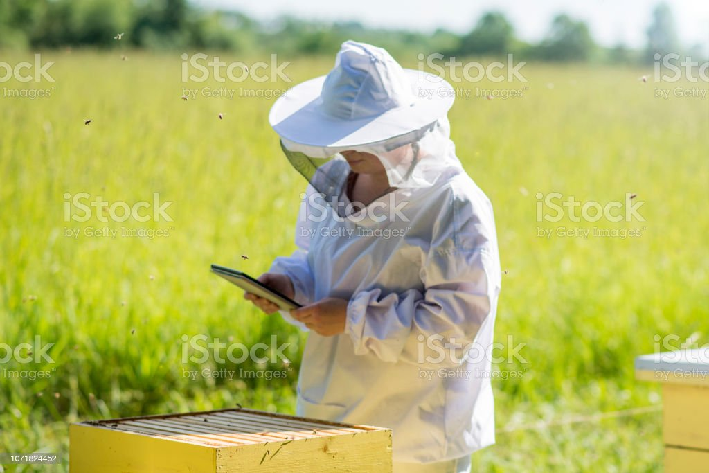 Life of a Beekeeper stock photo