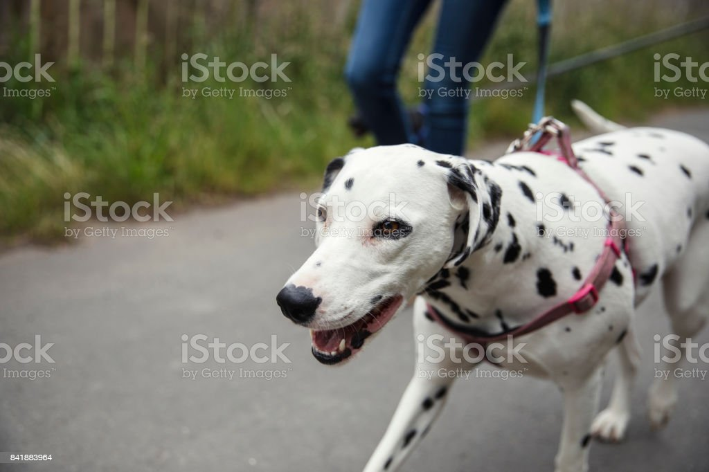 Life of a Dog Owner stock photo