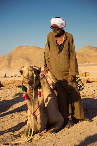 Sahara desert, Egypt - August 22, 2021: Traditionally dressed old man watching over camel. Camels are the most valuable animal for Bedouins.