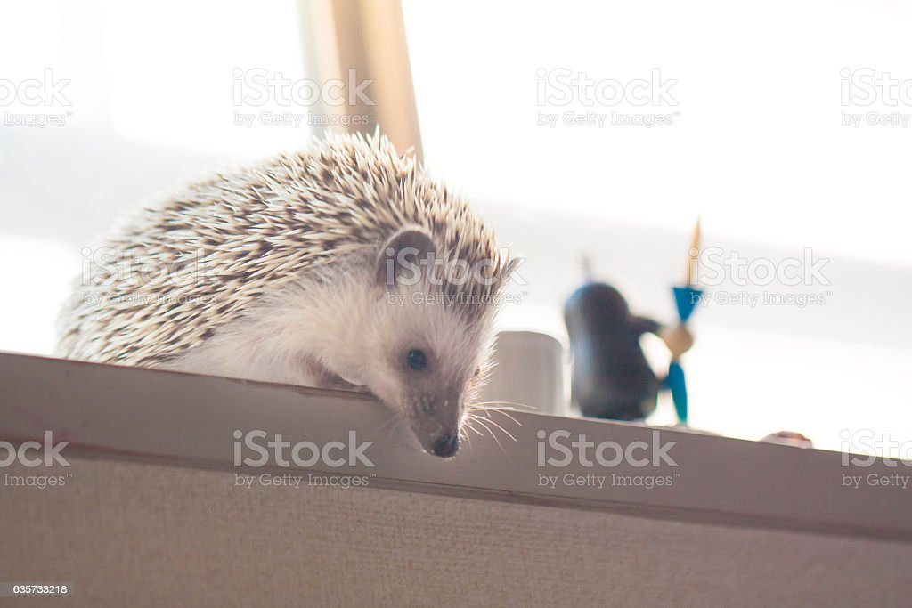 Life of cute hedgehog stock photo