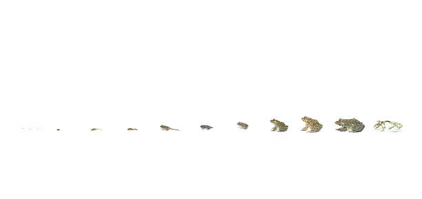 Life of Frogs stock photo