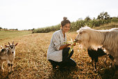 Young, smiling woman spending day on a family farm, feeding goats
