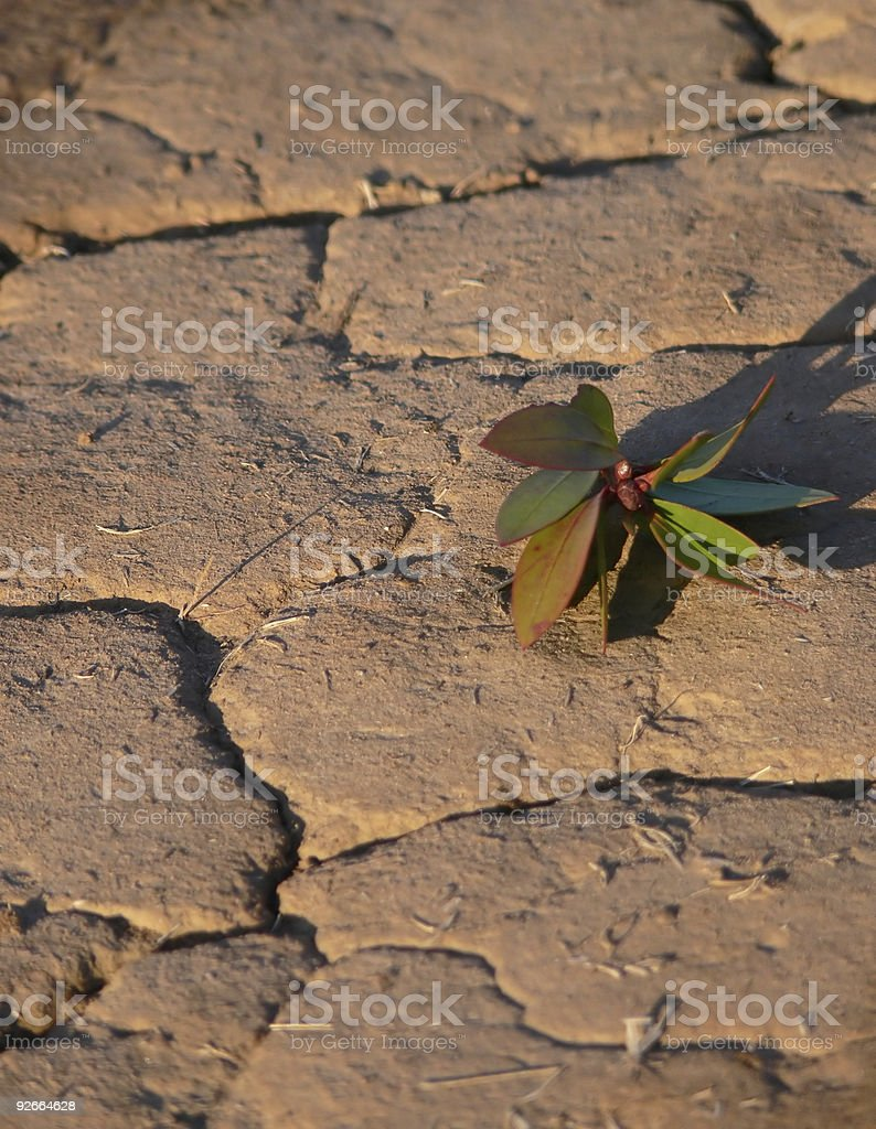 Life on dry ground. royalty-free stock photo