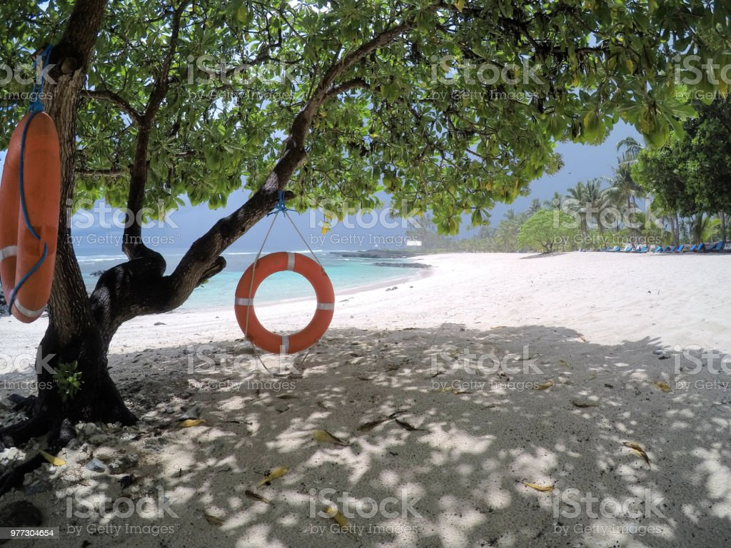 Life rings hanging on tree on beach on Upolu Island, Samoa, South Pacific stock photo
