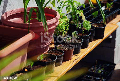 Shot of plants growing in flowerpots in the backyard at home