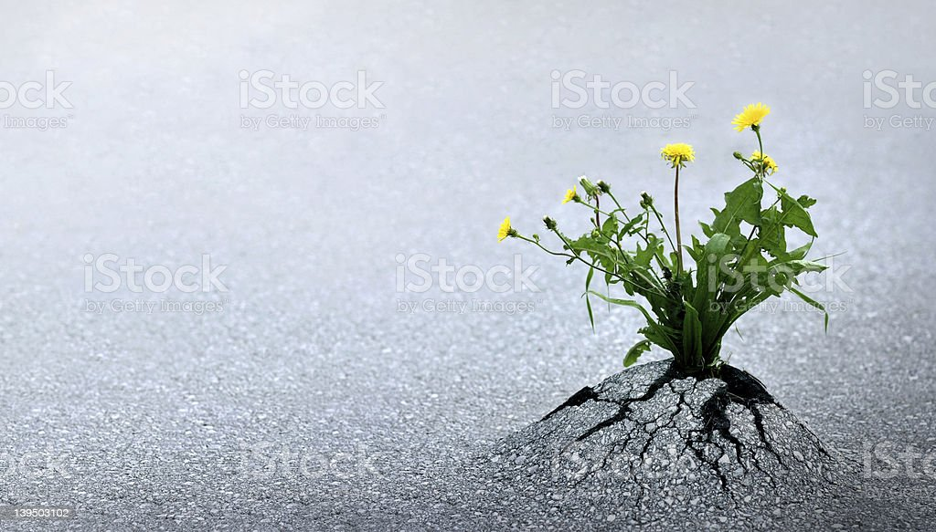 Life Triumph Against All Odds stock photo