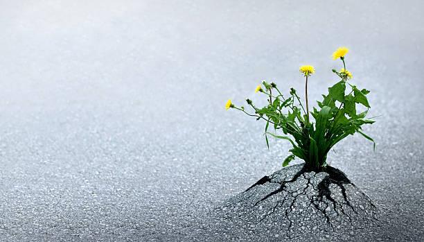 Life Triumph Against All Odds bildbanksfoto
