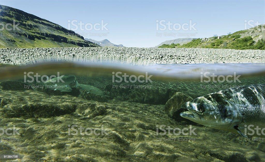 life underwater stock photo