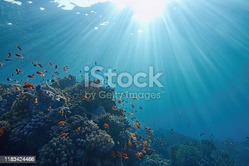 Life-giving sunlight underwater. Sun beams shinning underwater on the tropical coral reef. Ecosystem and environment conservation concept.
