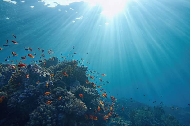 Life-giving sunlight underwater. Sun beams shinning underwater on the tropical coral reef. Ecosystem and environment conservatio Life-giving sunlight underwater. Sun beams shinning underwater on the tropical coral reef. Ecosystem and environment conservation concept. underwater stock pictures, royalty-free photos & images