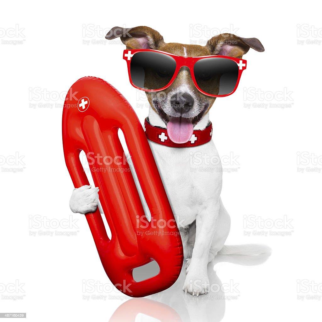 lifeguard dog stock photo