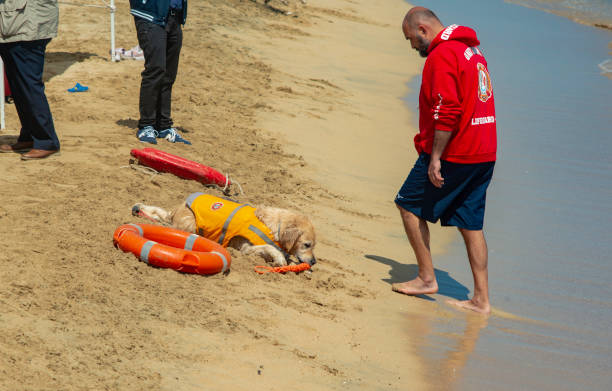 lifeguard dog, rescue demonstration with the dogs in the beach of Bari stock photo