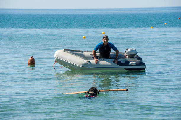 lifeguard hundar och instruktör vid stranden. - livbåt bildbanksfoton och bilder