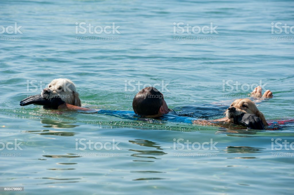 Lifeguard dogs and instructor at the beach. stock photo