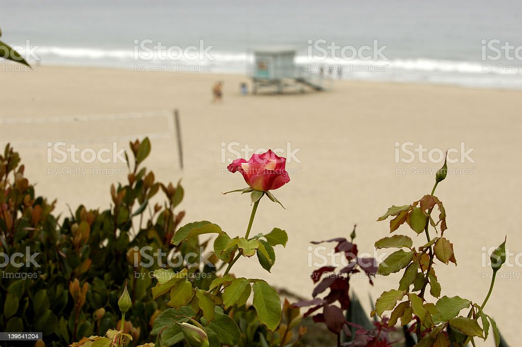 Lifeguard tower royalty-free stock photo