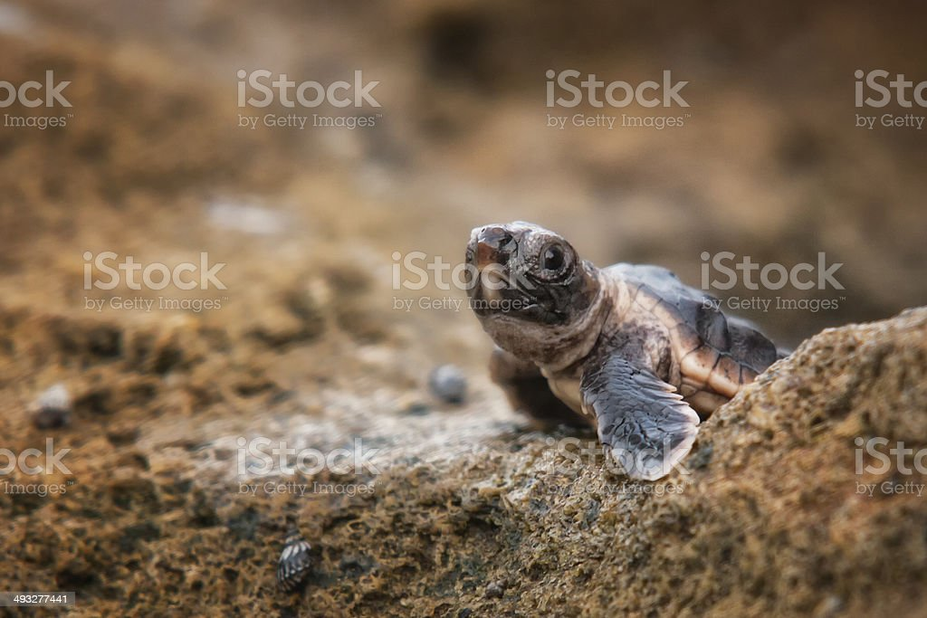 Life's Obstacles stock photo