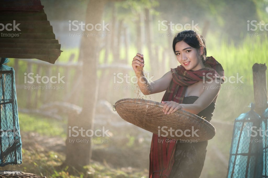 Lifestyle of rural Asian women in the field countryside thailand.Daily life of rural women in Thailand,Asia people at farmland. stock photo