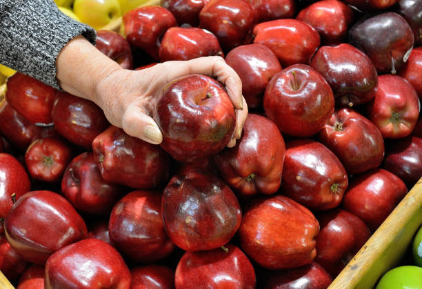 "Lifestyle, "" Red Delicious Apples "" Lifestyle...A shopper holds a ""Red Delicious Apple"" in her hand. red delicious apple stock pictures, royalty-free photos & images"
