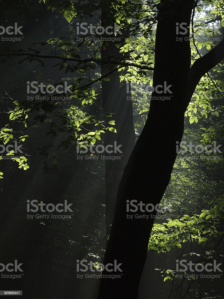 Light and shadow in the forest royalty-free stock photo