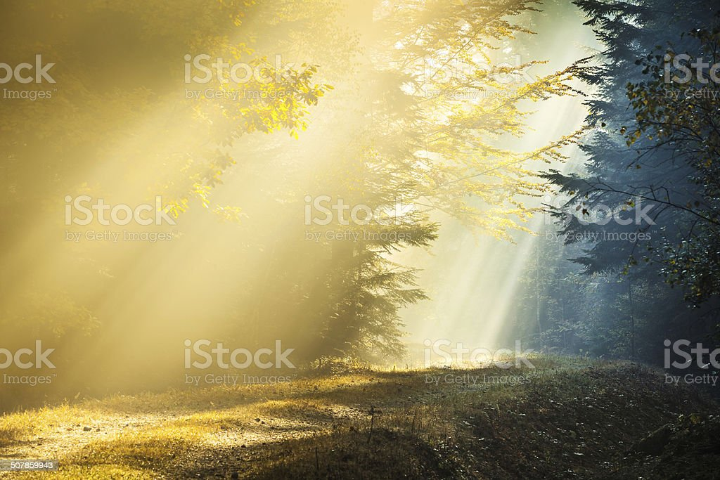 Light and Shadow - Sun Rays penetrating Foggy Autumn Forest stock photo