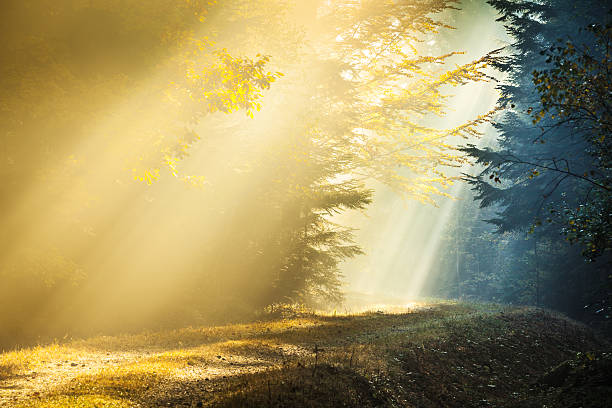 light and shadow - sun rays penetrating foggy autumn forest - natural phenomenon stock photos and pictures