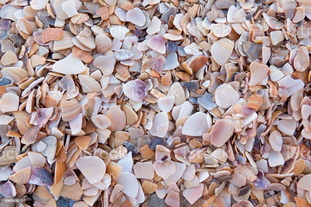 Light background of seashells photo libre de droits